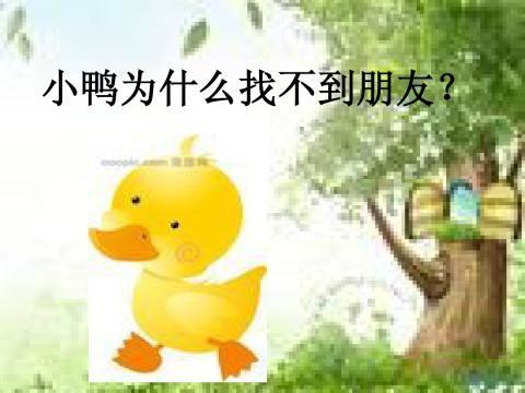 小鸭找朋友