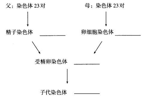 第二节基因在亲子代间的传递教学案